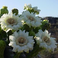 "Enjoy Tucson""s Natural Beauty"