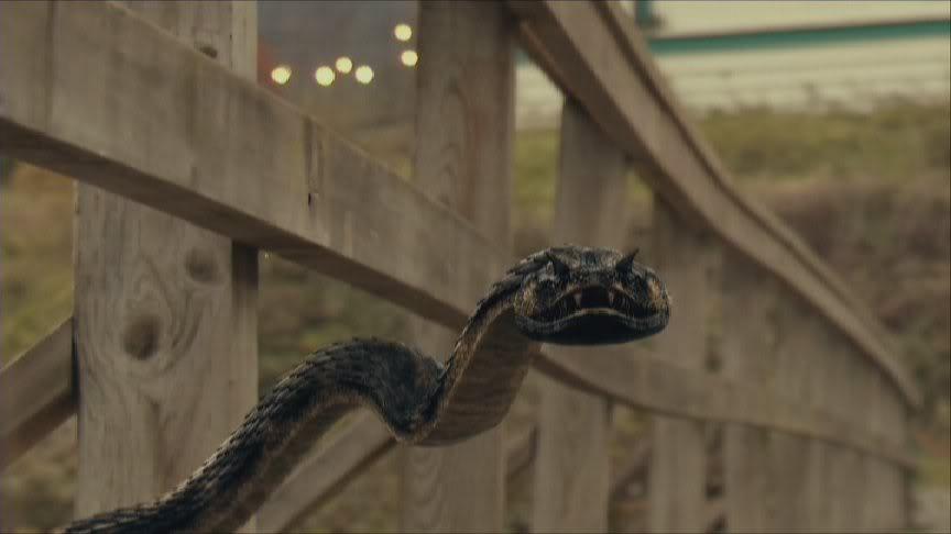 Bad Movie Safari: Vipers