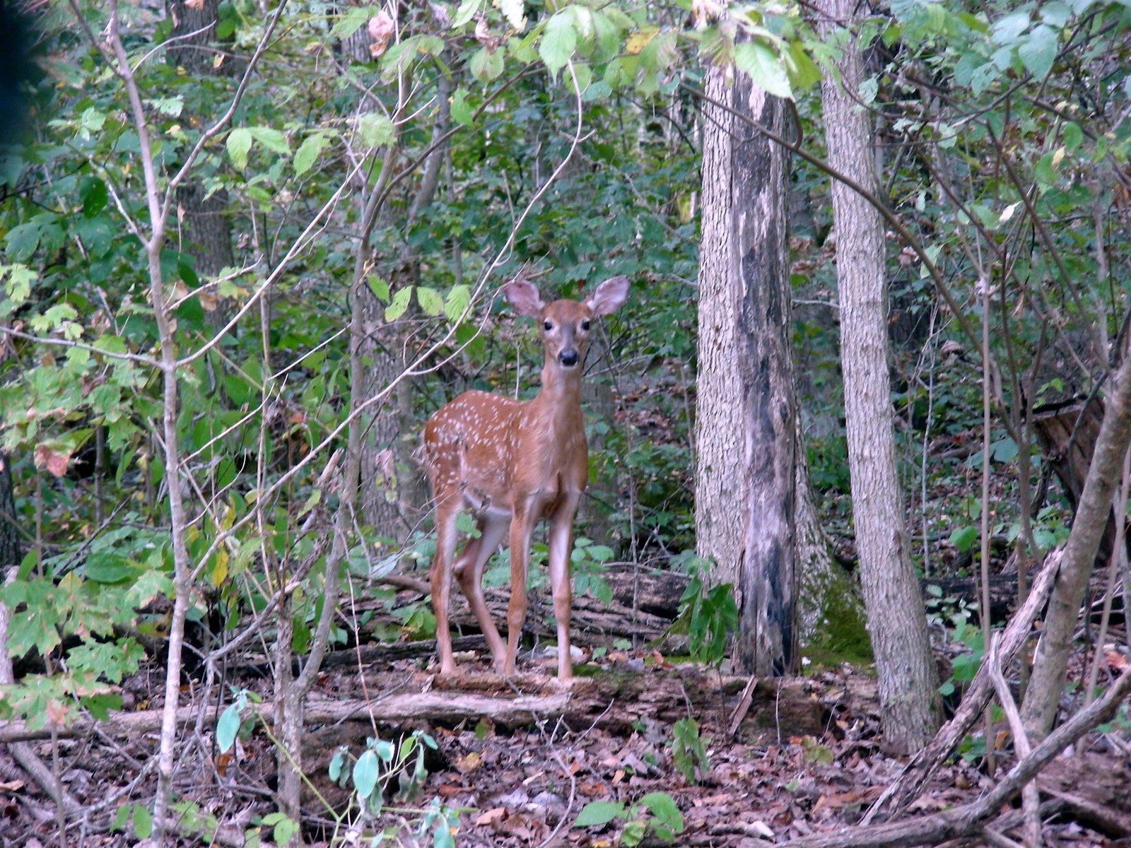 [deer]