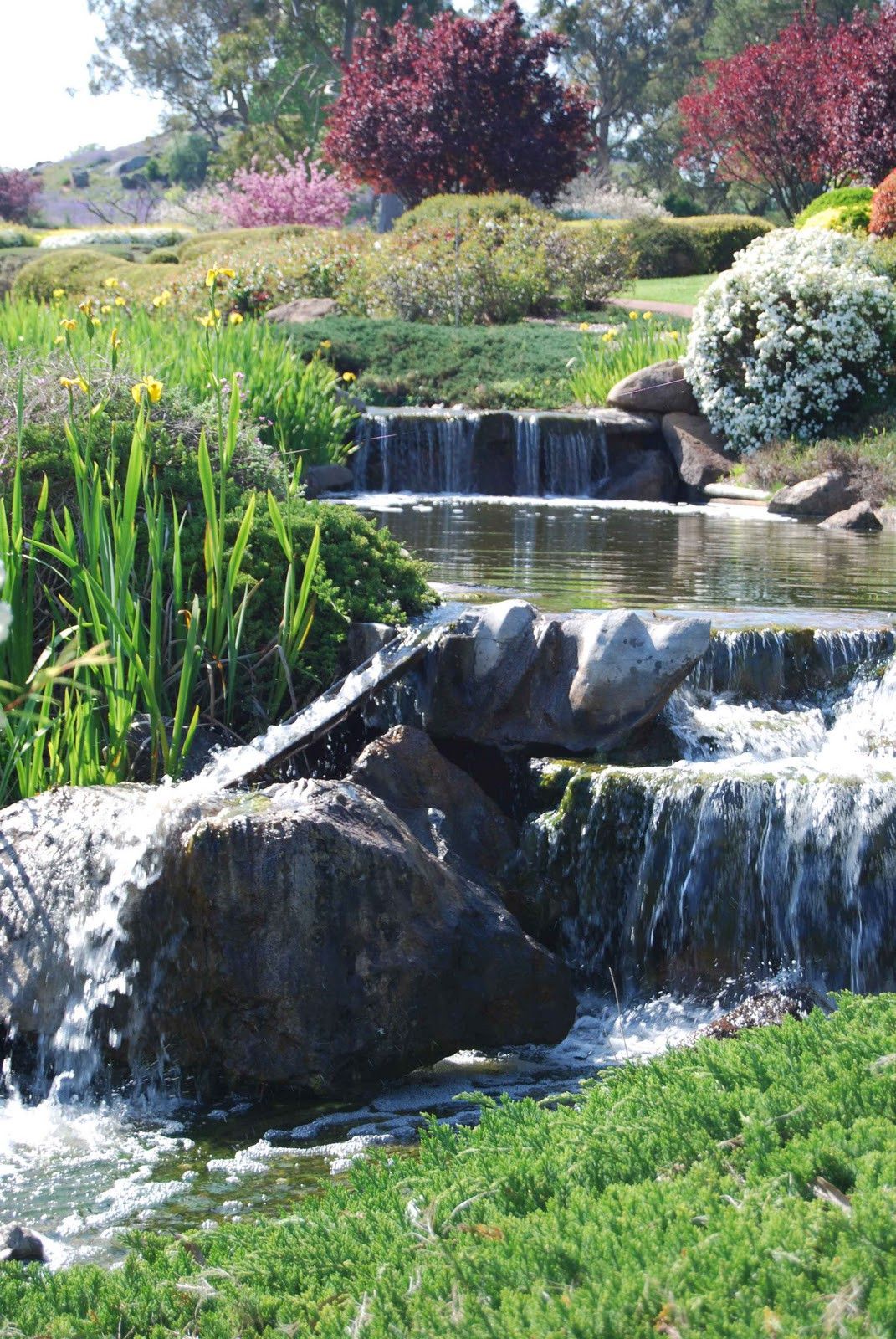 Becky Et Al: Cowra Japanese Garden