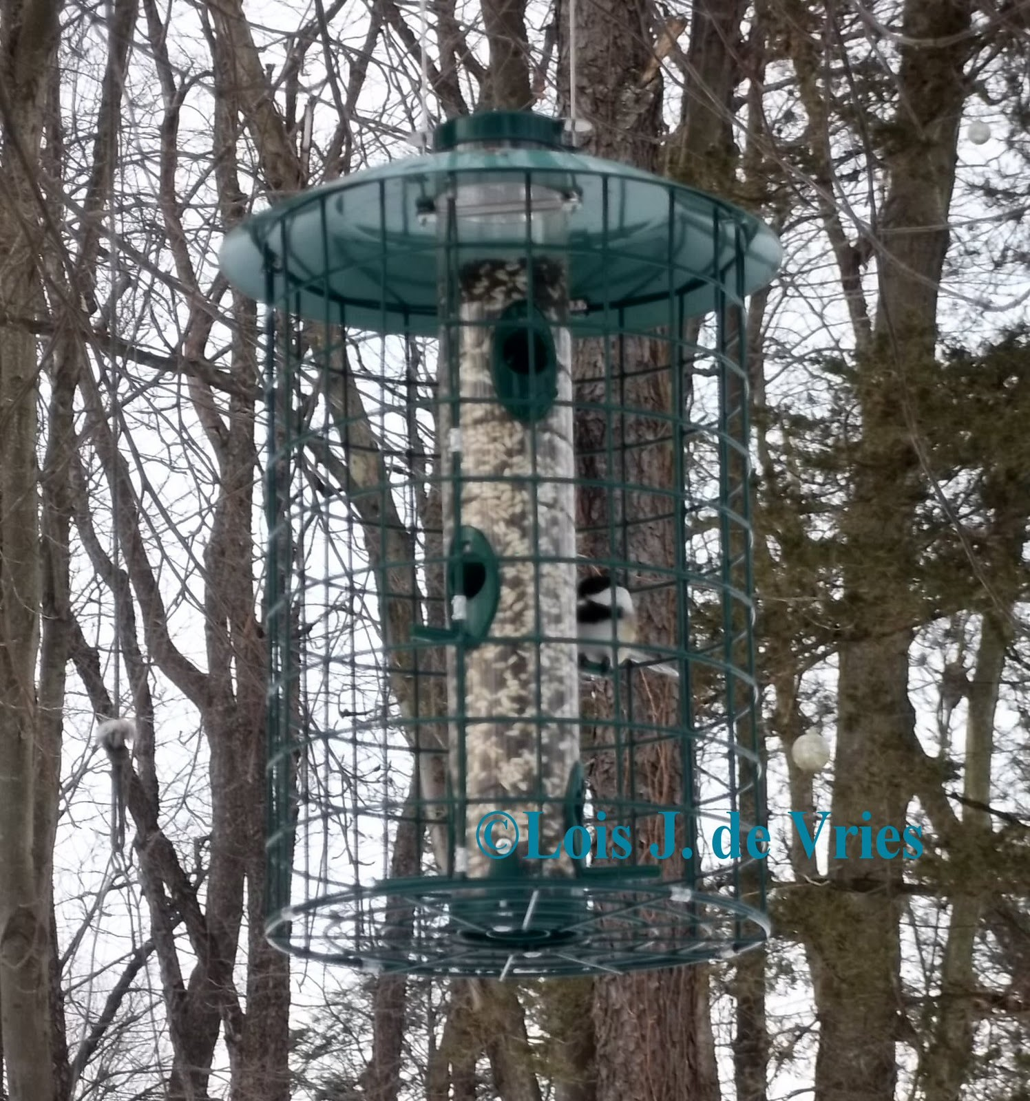 Squirrel-Proof Bird Feeder Idea