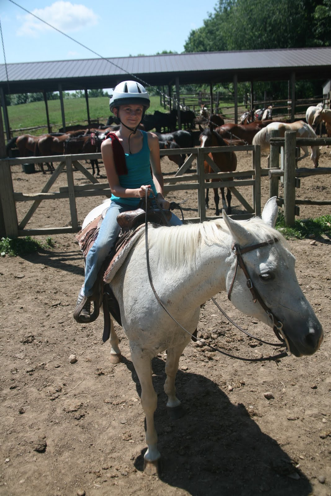 Horses Under 500 Dollars