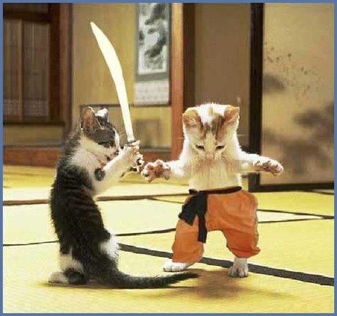 [gatos_samurais.bmp]