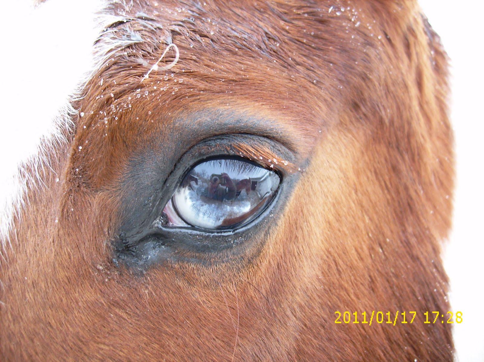 Borderlands Horse Sanctuary: January 2011
