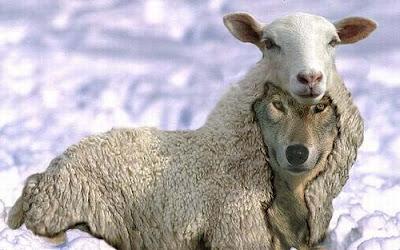 Lobo vestido de oveja