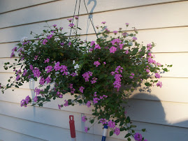 One of my hanging baskets on the deck