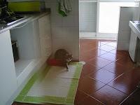 gato sapato