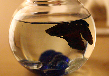 Pets care betta fish want an easy pet to care for try for Easy to care for fish