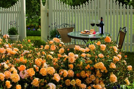 Roses In Garden: Flower Carpet Roses Are The Easiest Rose To Grow » Sage