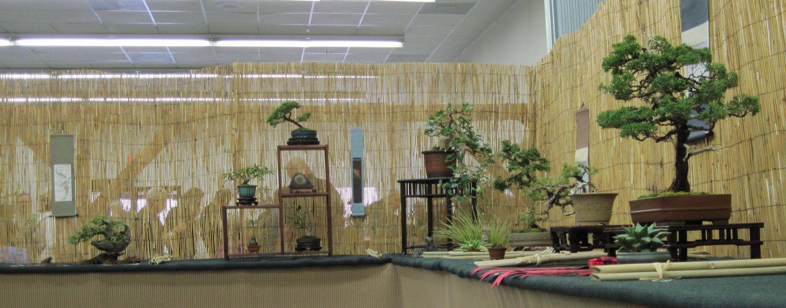 Bonsai Tree 17 Excellent Indoor Lighting Inspirations