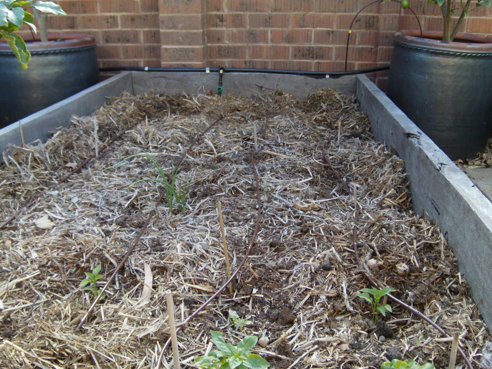 simple green frugal co op low pressure drip irrigation