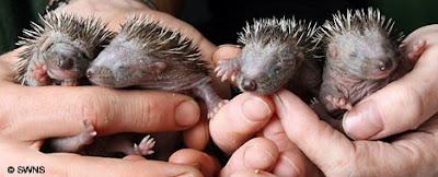 Yeni DoğaN Hayvanlar...;)