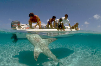 Shark attacks on dolphins on the rise in WA in line with rising ocean temperatures