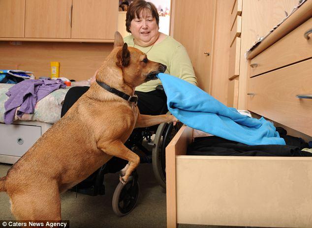 Dog Helper Sandie Aids Disabled Owner Doing Household