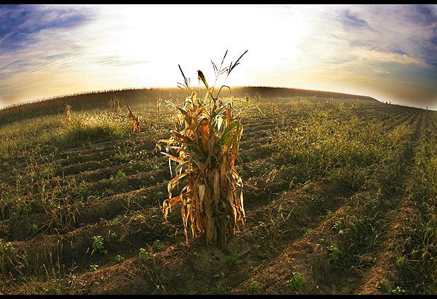 Cambio climático V/S Agricultura