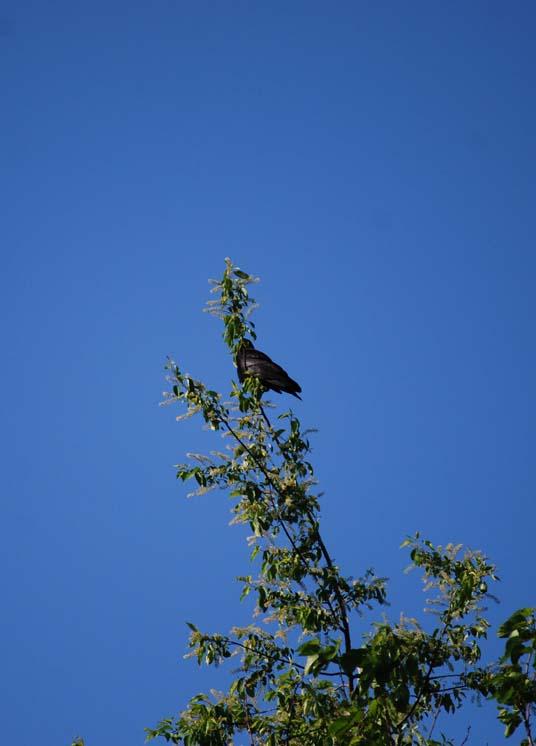 [080521+Crow]