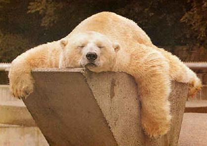 The Sleepin' Bear