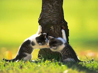 cat_0068.jpg