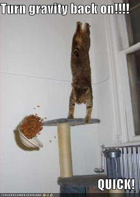external image funny-pictures-gravity-cat.jpg