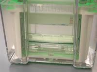 Electrophoresis Experiment