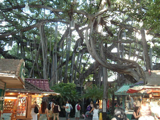 Banyan Tree, a parasite common in Hawaii, sending shoots down into the ground to start new roots once it's support-host has died.