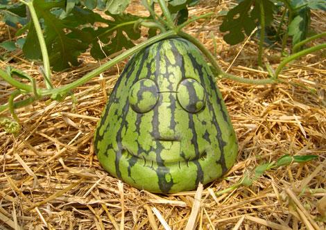 [japanwatermelon.jpg]