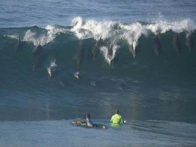 ola de delfines