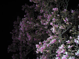 My Magnolia Tree