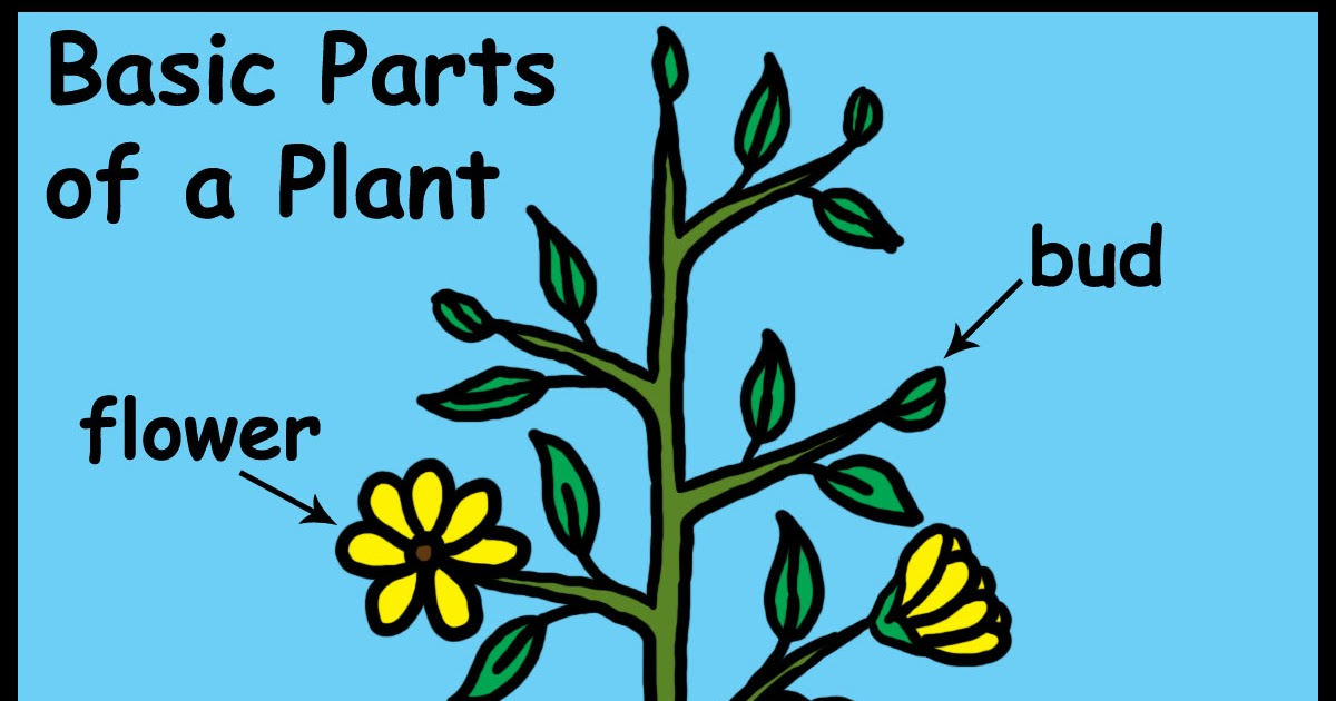 Ms M's Star Students: Parts of a Plant
