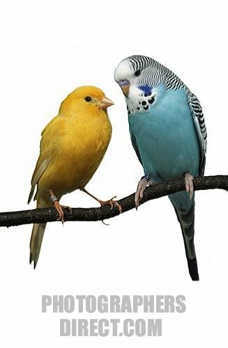Budgies are Awesome: February 2011