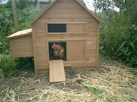 New Hen House