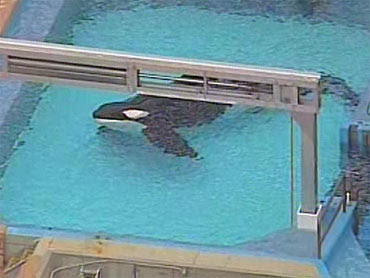 Diary Of A Killer Whale: What Motivated Tilikum's Attack On Dawn