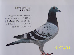 Spice Girl (Hans Eijerkamp and Sons) Janssen V. Loon