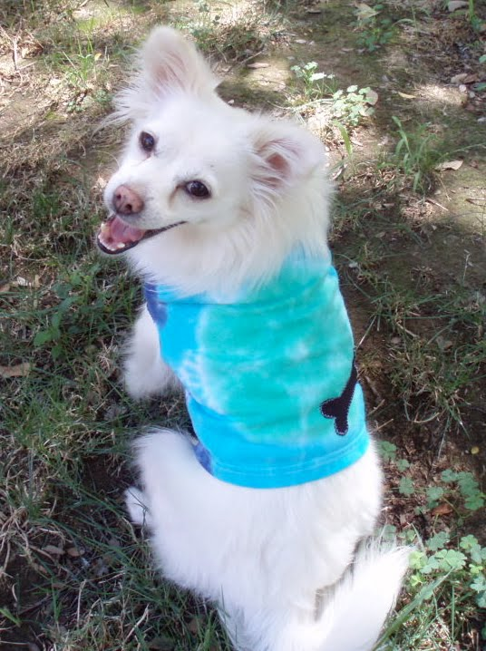 Tie-Dye Paw-er and the Quickie Muscle Tee!