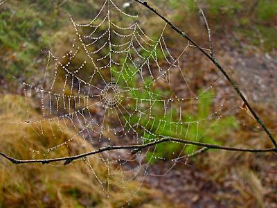 en krok upp spindel väv dejta koreanska