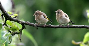 Wild Birds Unlimited: Does anyone else think baby ...