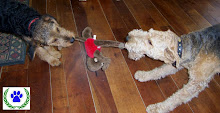 Dogs' Choice Award for Tug-of-War