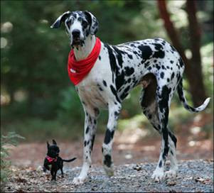 Perro+grande+ +perro+chico - Vender más sin bajar el precio: el efecto del valor de referencia