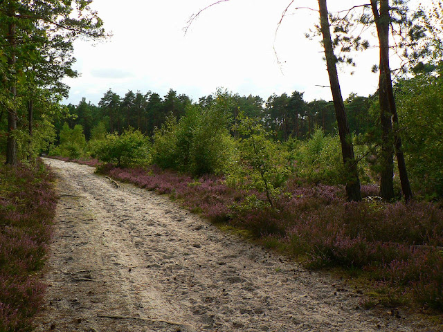 larchant forêt landes