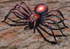 arachnid, spider