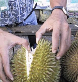 durian, durian festival, tagum city, mayor uy, devil's fruit