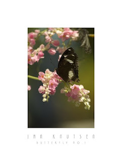 Buitterfly No. 1 by Photographer Jan Knutsen