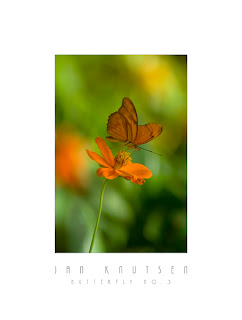 Butterfly No. 3 by Photographer Jan Knutsen