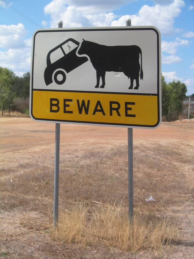 [Car_Eating_Cows_Sign.jpg]