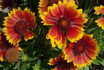 Footnotes Stories Flowers Algernon