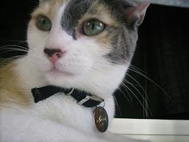 """la mia gattina""""micia"""""""