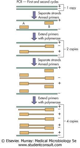 [PCR.jpg]