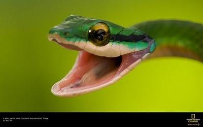 fotos de mascotas y animales divertidos