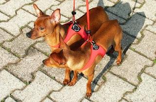 Centro cinofilo educativo denebystar asd pettorine tre ponti for Nomi per cagnolini di piccola taglia