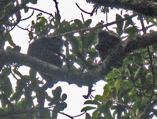 Erica Ridley in Costa Rica: monkeys